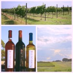 Introduction: Meet Pedernales Cellars